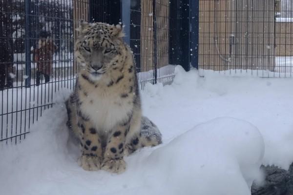 冬の旭山動物園