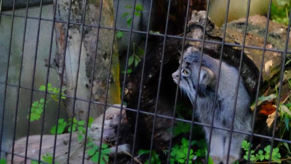 旭山動物園の夜の動物園